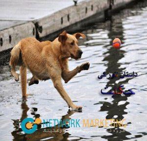 راه رفتن سگ روی آب